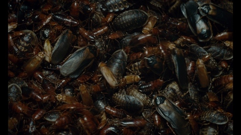 Švankmajer's INSECT to Premiere at the Rotterdam Festival